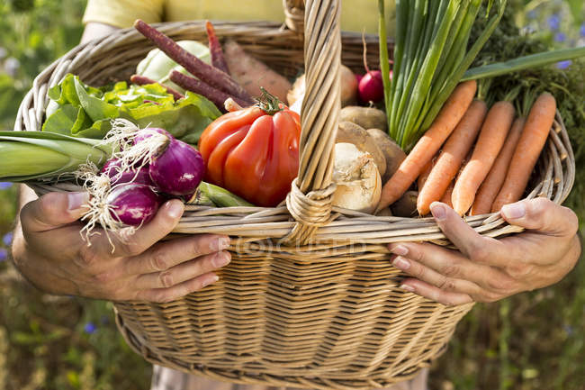 Cropped image of Man holding basket full of organic vegetables — Stock Photo