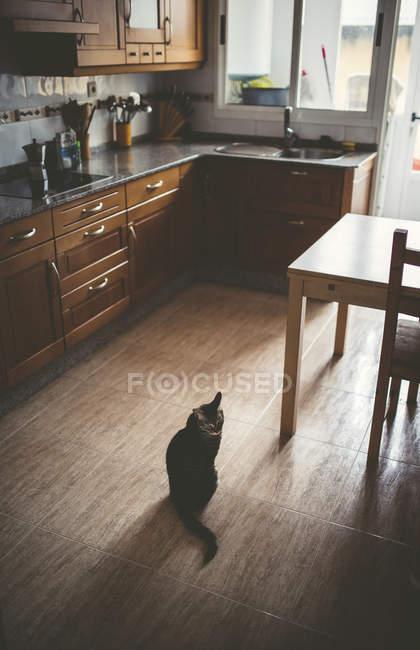 Таббі кіт сидів на кухні підлога — стокове фото