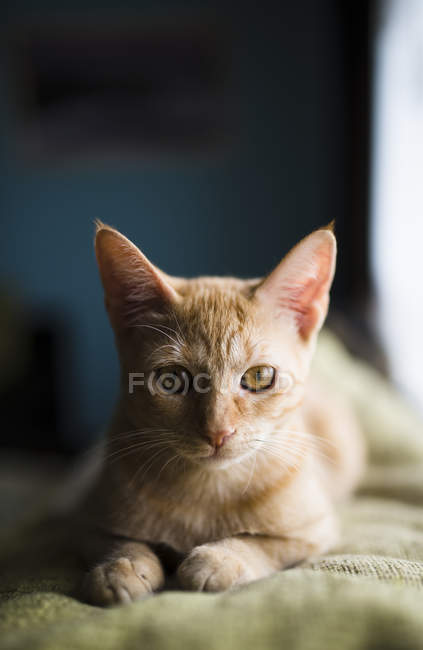 Cat on the top of a couch at home — Stock Photo