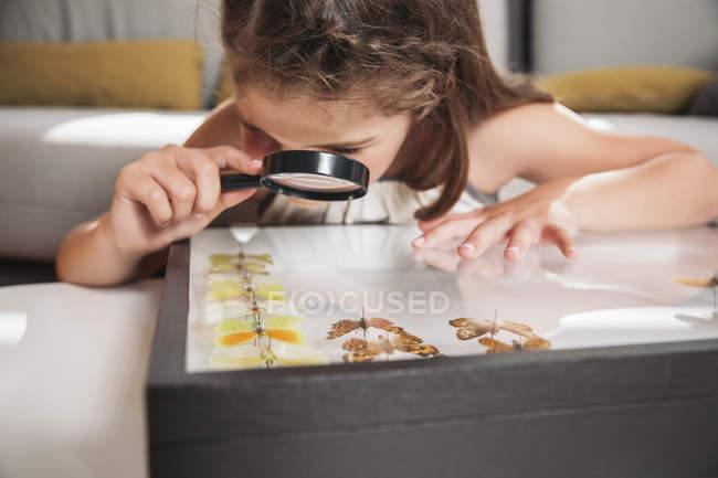 Девушка смотрит на препараты бабочки с увеличительными очками — стоковое фото