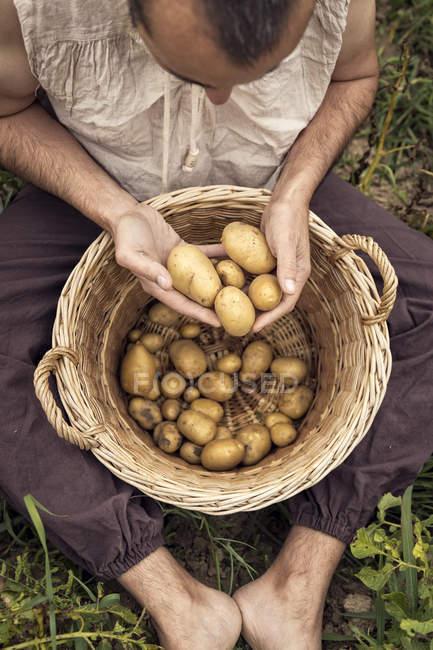 Hombre sentado en el campo con patatas frescas recogidas en la cesta de mimbre - foto de stock