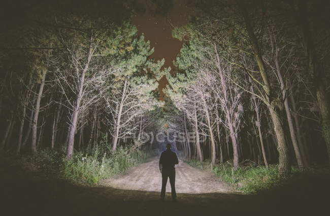 Back view of a man standing on forest track at night illuminating the woods with a flashlight — Stock Photo