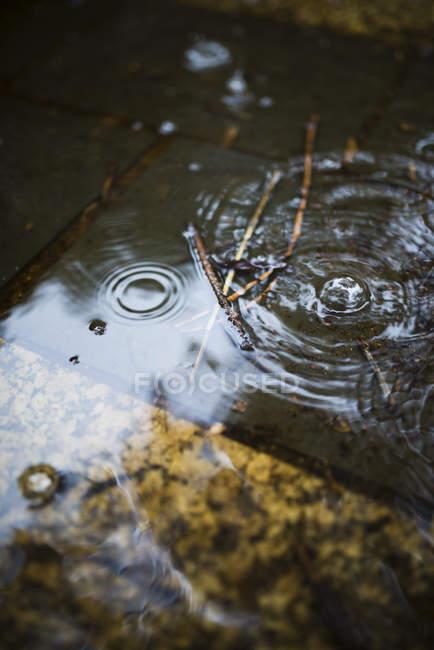 Близько від крапель води на чорний день — стокове фото