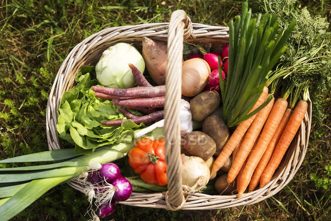 Basket of fresh picked organic vegetables on grass in garden — Stock Photo