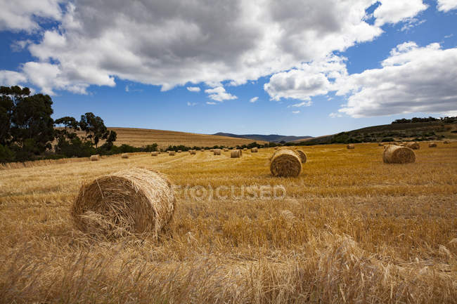 View to harvested field with hay bales near Route 62, South Africa — Stock Photo