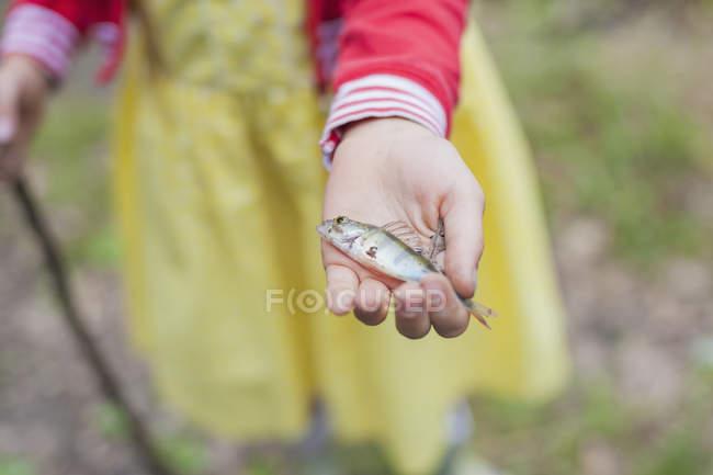 Imagen recortada de Chica sosteniendo pequeña percha - foto de stock