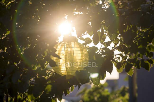 Лампион висит на дереве в вечерние сумерки — стоковое фото