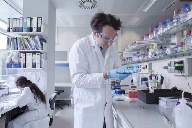 Lab technician examining grasshopper in laboratory — Stock Photo
