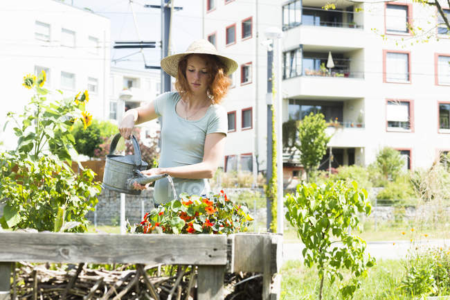 Young woman watering plants, urban gardening concept — Stock Photo