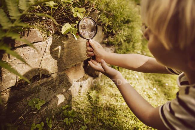 Мальчик смотрит через лупу на листе — стоковое фото