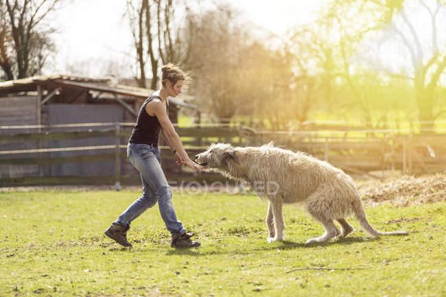 Femme de formation Irish Wolfhound sur une prairie — Photo de stock