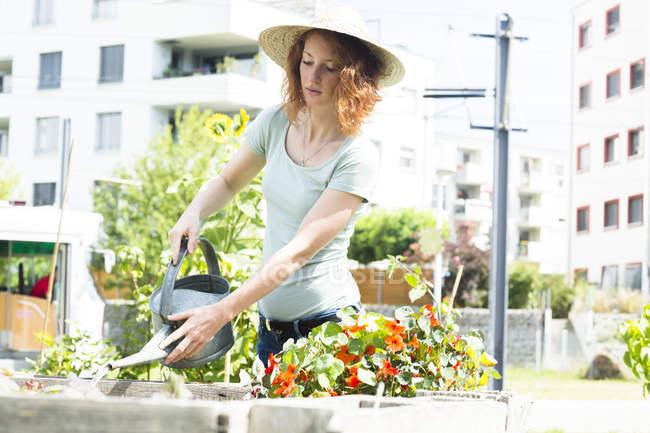 Young woman gardening, urban gardening, raised bed, watering — Stock Photo