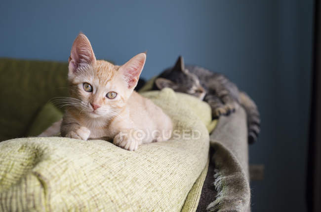 Two cats lying on backrest of a couch — Stock Photo