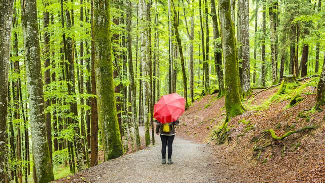 Germania, Baviera, Allgaeu, donna con ombrello rosso sulla pista forestale — Foto stock