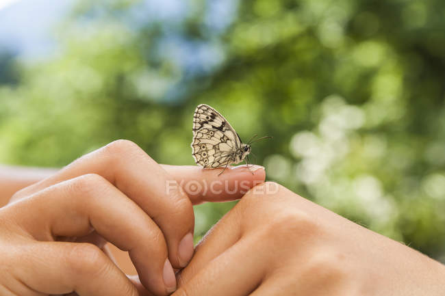 Butterfly on female hands — Stock Photo