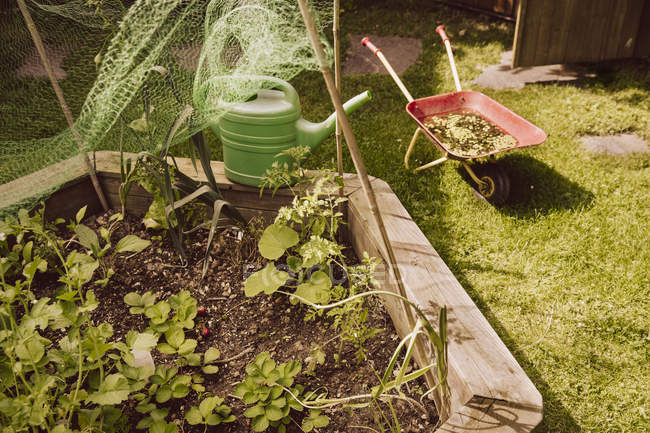 Private vegetable garden view — Stock Photo