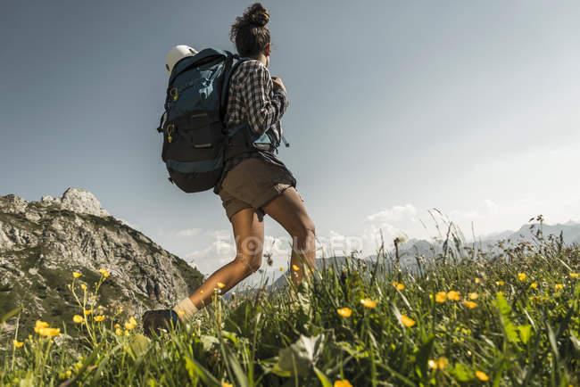 Австрия, Тироль, Таль Таннхаймер, молодая женщина, походы на альпийском лугу — стоковое фото
