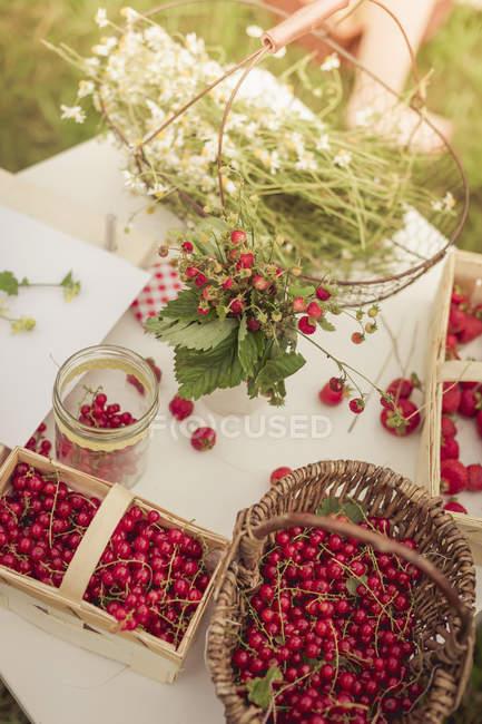 Цветы ромашки и красной смородиной — стоковое фото