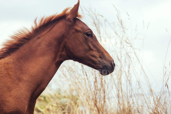 Портрет коричневая осленок лугу — стоковое фото