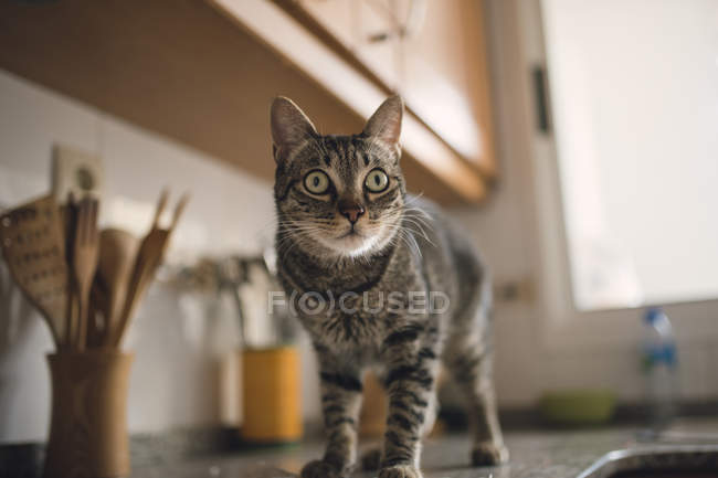 Amazed tabby cat standing on tabletop in kitchen — Stock Photo