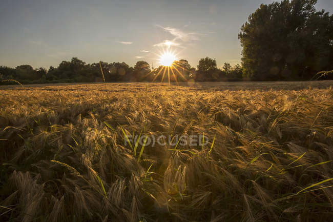 Scenic view of field at sunset, Bavaria, Germany — Stock Photo
