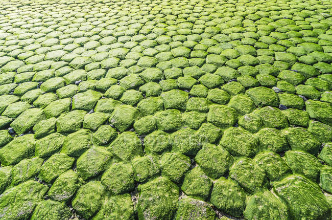 Close-up de pedras verdes molhadas Moss-grown — Fotografia de Stock