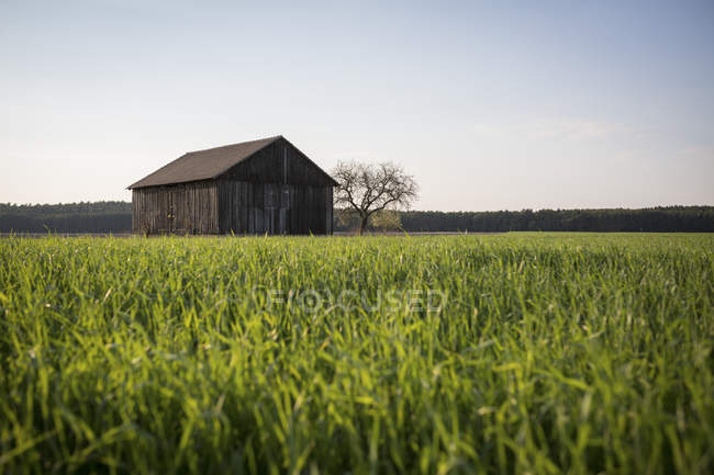 Vista fienile con campo in primo piano, Germania — Foto stock