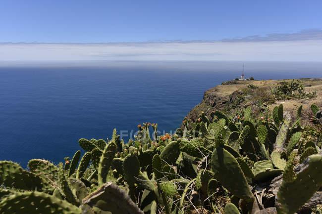 Portugal, Madeira, vista para a costa com cactos — Fotografia de Stock