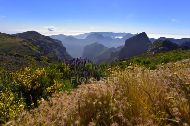 Portugal, Madeira, Pico Ruivo e plantas em primeiro plano durante o dia — Fotografia de Stock