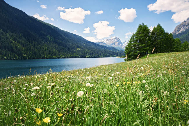 Switzerland, Grisons, Sufers, Sufnersee and flower meadow during daytime — Stock Photo
