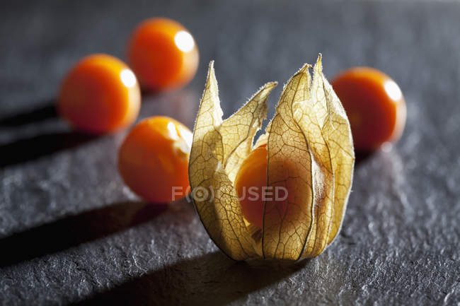 Fresh Physalis with dried flower — Stock Photo