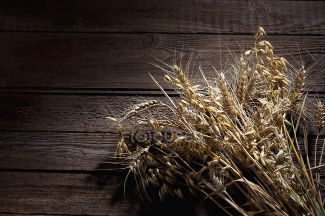 Oat, Avena, barley, and rye in light on wooden background — Stock Photo