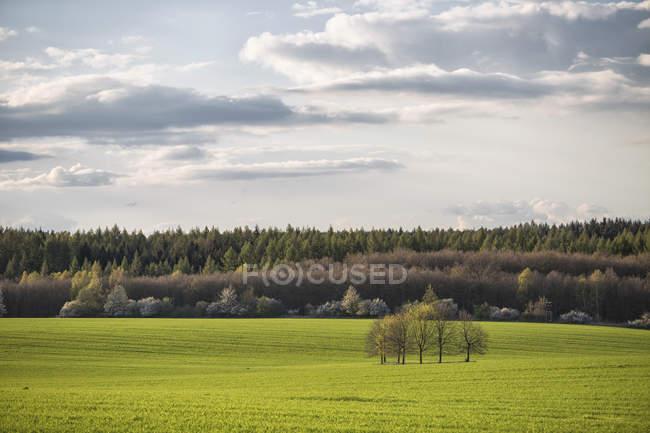 Вид на зеленое поле и группу деревьев в дневное время, Фламинг, Озил, Германия — стоковое фото