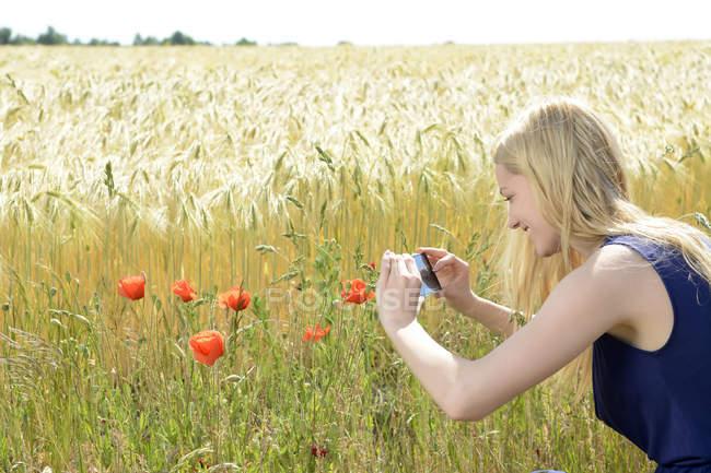 Молодая женщина фотографирует маки со смартфона — стоковое фото
