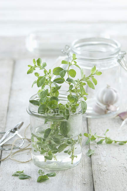 Closeup view of fresh oregano stems in glass of water — Stock Photo