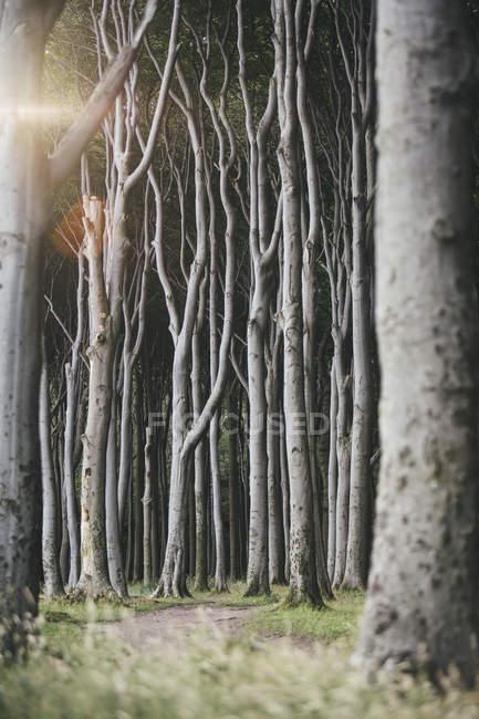 Лес и стволы деревьев днем — стоковое фото