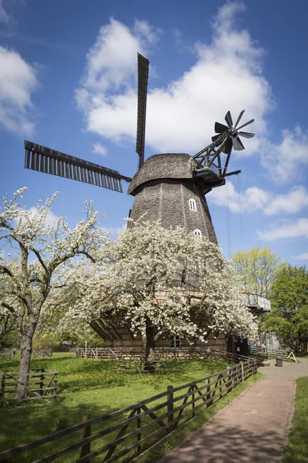 Німеччина, Берлін-Бріц, вітряк і квітучі дерева cherrry — стокове фото