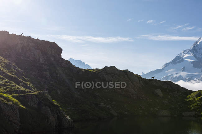 France, Mont Blanc, Lac Cheserys, bouquetin alpin sur la crête d'une montagne — Photo de stock