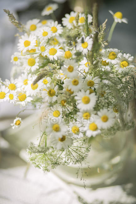Flower vase of wild chamomile — Stock Photo