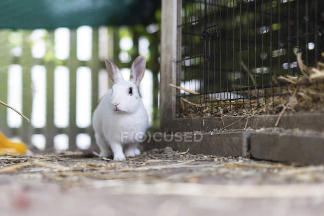 Beau mignon lapin blanc à côté de la cage — Photo de stock
