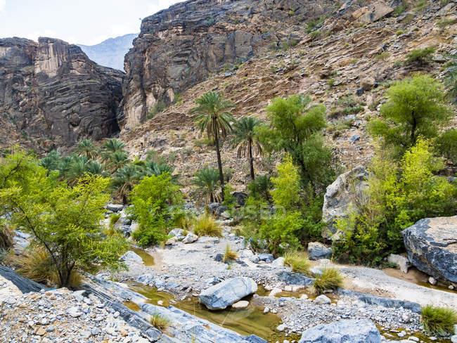 Oman, Jebel Akhdar, Al Batinah, vista panorâmica de Wadi Bani Awf — Fotografia de Stock
