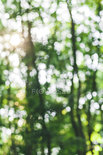 Defocused forest during daytime on blurred background — Stock Photo