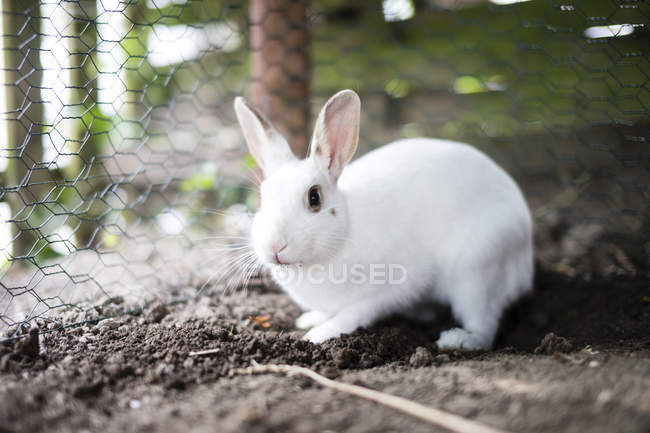 Beautiful cute white rabbit beside cage — Stock Photo