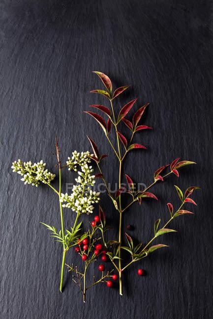 Flores, bagas vermelhas e folhas de bambu celestial na ardósia — Fotografia de Stock