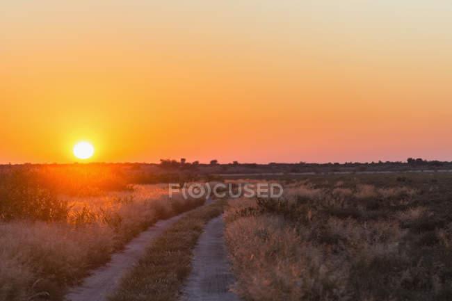 Botsuana, Kalahari, Central Kalahari Game Reserve, piste ao nascer do sol — Fotografia de Stock
