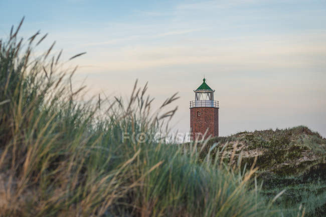 Green heath with lighthouse on background — Stock Photo