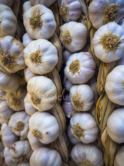 Висит сырой чеснок косы — стоковое фото