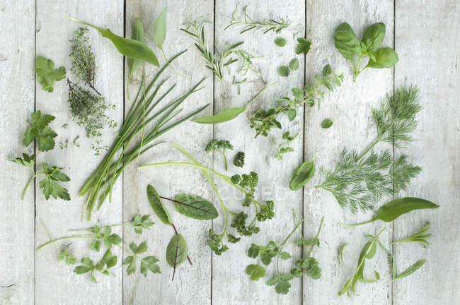 Vista superior de diferentes hierbas frescas en madera blanca - foto de stock