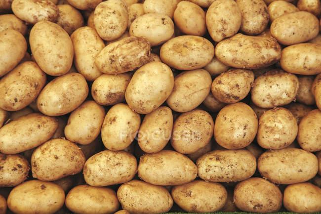 Rohe Kartoffeln im heap — Stockfoto