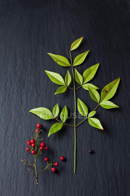 Bagas vermelhas e folhas de bambu celestial na ardósia — Fotografia de Stock
